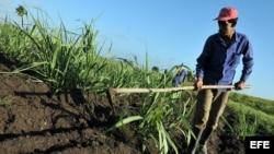 Un campesino limpia un sembrado en el municipio habanero de Mariel (Foto: Archivo).