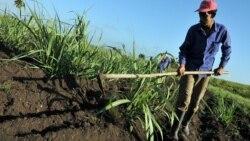 """Cuando Fidel Castro """"predijo"""" que la producción agrícola aumentaría 100% en 11 años"""