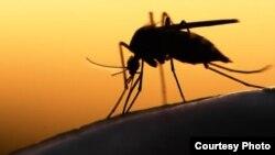 Los tres primeros casos de Zika detectados en Cuba ocurrieron en personas que viajaron desde Venezuela.