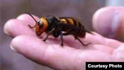 Un estudio subraya que algunas especies no resistirán el incremento en las temperaturas.