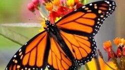 """Entre Nosotros: """"Mariposa, no olvides que un día fuiste gusano"""""""