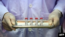 Un técnico de laboratorio muestra el sábado en el Centro Nacional de Investigaciones con Primates de Tailandia las dosis de una vacuna para prevenir el COVID-19 listaS para inoculárselas a monos (Mladen Antonov/AFP).