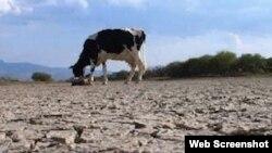 Reporta Cuba. La sequía afecta también áreas rurales.