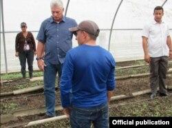 El gobernante cubano visita en Pinar del Río semilleros de tabaco afectados por el huracán Michael.