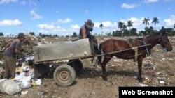 Carretones de caballos para recoger la basura en Campo Florido. (Foto Archivo: Elaine Díaz/Periodismo de Barrio)