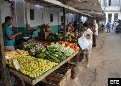 Los precios del ajo, cebolla, ají y tomate de la sazón cubana están por las nubes para el bolsillo común.