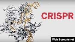 El método de edición del genoma conocido como CRISPR como el descubrimiento científico de 2015. (Revista Science)
