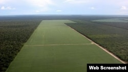 Plantaciones de soja