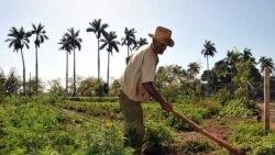 Anuncian disminución de los precios de los insumos agrícolas