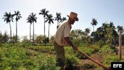 Opinan en Cuba sobre la agricultura cubana