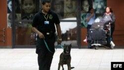 Un oficial del Cuerpo de Seguridad Aeroportuaria utiliza un perro en la búsqueda de drogas en las maletas de los pasajeros hoy