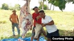 Cubanos varados en Darién compran una vaca y sacian deseos de comer carne de res