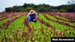 Un campesino labora la tierra en una finca en Cuba. (Archivo)