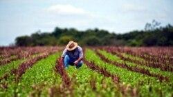 El gobierno es el responsable: señalan agricultores ante falta de alimentos
