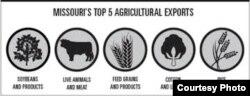 Missouri exporta soya, carnes, granos, algodón y arroz