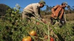 Agricultores reportan afectaciones por crisis de combustible