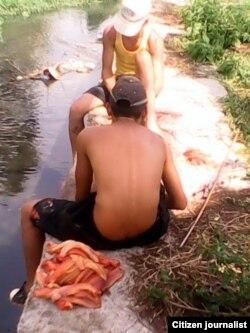 Reporta Cuba. Pescan clarias en fosas. Foto: Bárbara Fernández.