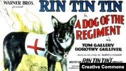Rin Tin Tin en 1929.