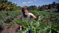 Otros dos campesinos pierden tierras en usufructo en Cuba
