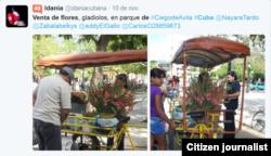 Reporta Cuba Venta de flores Foto @idaniacubana