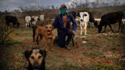Una estampa del campo cubano en plena pandemia. AP Photo / Ramon Espinosa