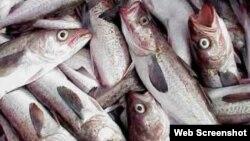 Reporta Cuba pescado.