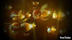 """""""Noche insular, jardines invisibles"""""""