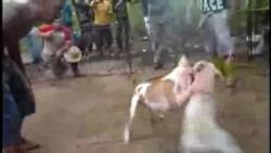 Denuncian proliferación en Cuba de abusos contra los animales
