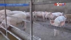 Hostigamiento de régimen cubano hacia vendedores de carne de cerdo provoca desabastecimiento