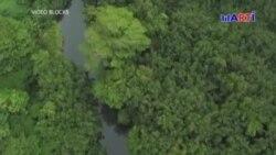 Cubanos emigrantes se aventuran a pasar por la arriesgada Selva del Darién para salvarse