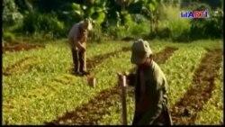 Crisis de combustible afecta la agricultura cubana